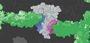 Matched antibody pair kit