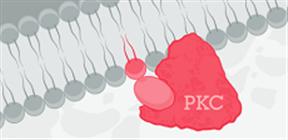 PKCリソースページ