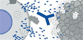 がん免疫療法のアプローチ
