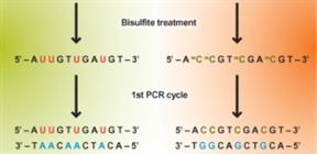 Bisulfite DNA modification kit