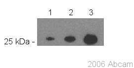 Western blot - GFP antibody [LGB-1] (ab291)