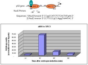 ChIP - Anti-KAT13A / SRC1 antibody [1135/H4] - ChIP Grade (ab84)
