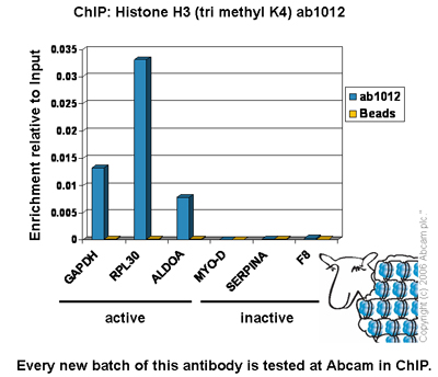 ChIP - Histone H3 (tri methyl K4) antibody [mAbcam 1012] - ChIP Grade (ab1012)