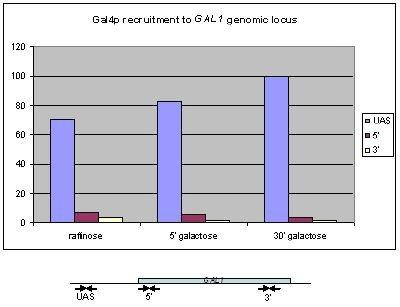 ChIP - GAL4 antibody - ChIP Grade (ab1396)