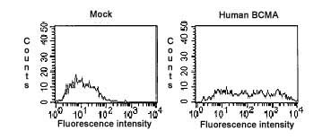 Flow Cytometry - BCMA antibody [Vicky-1] (ab17323)