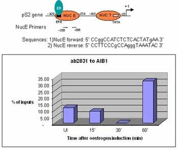 ChIP - KAT13B / AIB1 antibody - ChIP Grade (ab2831)