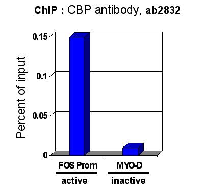 ChIP - CBP antibody - ChIP Grade (ab2832)