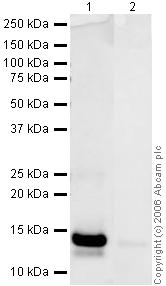 Western blot - PDGF BB antibody (ab23914)