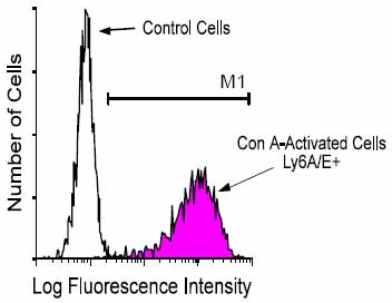 Flow Cytometry - Sca1 / Ly6A/E antibody [D7] (FITC) (ab25031)