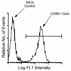 Flow Cytometry - CD86 antibody [2D10] (FITC) (ab25143)