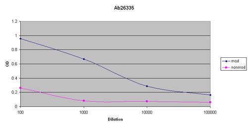 ELISA - Rad17 (phospho S635) antibody (ab26335)