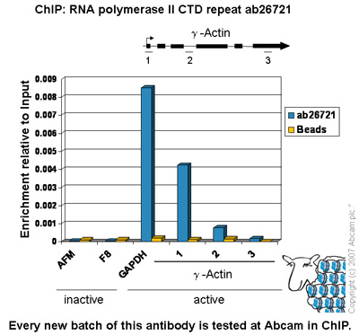 ChIP - RNA polymerase II CTD repeat YSPTSPS antibody (ab26721)