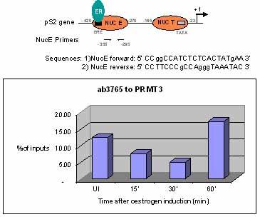 ChIP - PRMT3 antibody - ChIP Grade (ab3765)