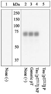 - Tau (phospho T212) antibody (ab4842)
