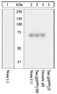 Western blot - Tau (phospho S409) antibody (ab4861)