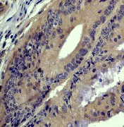 Immunohistochemistry (Paraffin-embedded sections) - General Receptor for phosphoinositides 1 antibody (ab40884)