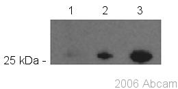 Western blot - GFP antibody [LGB-1] (Biotin) (ab42562)