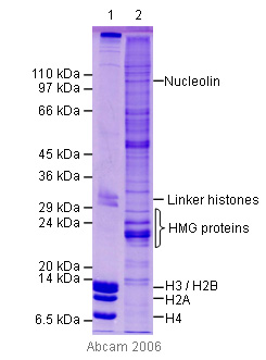 SDS-PAGE - Chicken-Erythrocyte Nuclear Lysate (ab45274)