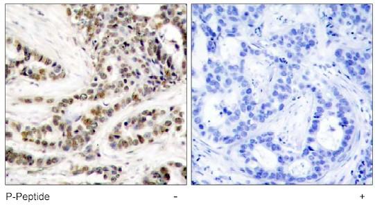 Immunohistochemistry (Paraffin-embedded sections) - CREB (phospho S129) antibody (ab47373)