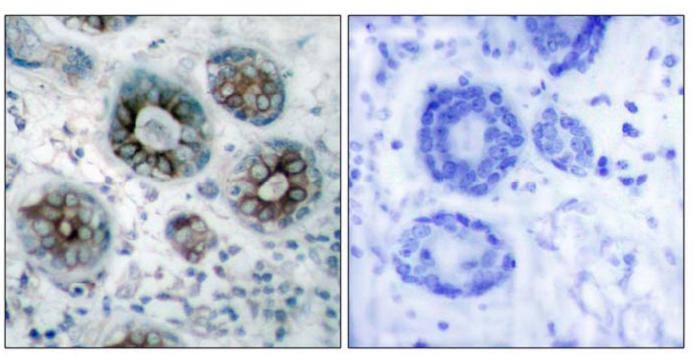 Immunohistochemistry (Paraffin-embedded sections) - GAP43 antibody (ab47510)