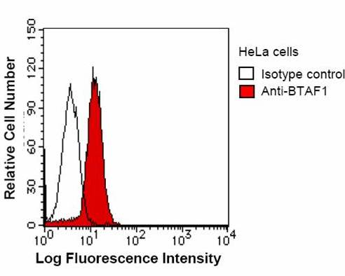 Flow Cytometry - TAF172 antibody [BTA3D61] (ab50990)