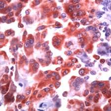 Immunohistochemistry (Formalin/PFA-fixed paraffin-embedded sections) - COX1 / Cyclooxygenase 1 antibody (ab52106)