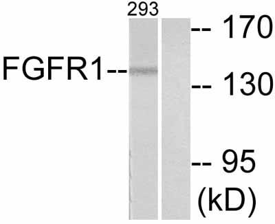 Western blot - FGFR1 antibody (ab52163)