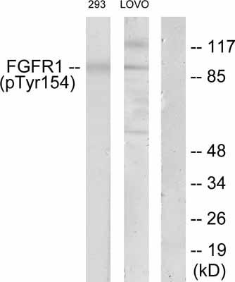 Western blot - FGFR1 (phospho Y154) antibody (ab52165)