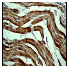 Immunohistochemistry (Paraffin-embedded sections) - beta Actin antibody [EP1123Y] (ab52614)