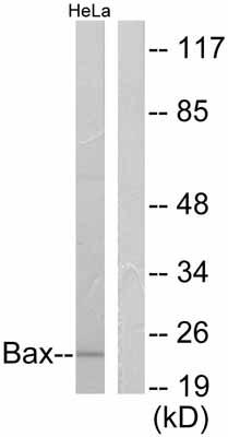 Western blot - Bax antibody (ab53154)