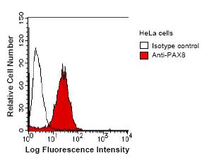 Flow Cytometry - PAX8 antibody [PAX8R1] (ab53490)