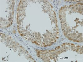 IHC-P - ASNA1 antibody (ab54843)