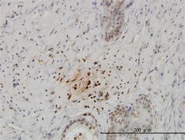 IHC-P - Kisspeptin antibody (ab55384)
