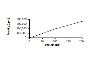 Functional Studies - TrkB protein (Active) (ab56652)