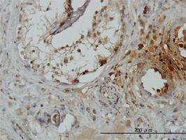 IHC-P - TRIM49 antibody (ab57559)
