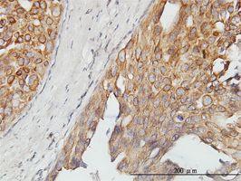IHC-P - TUG antibody (ab57720)