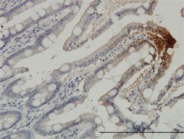 IHC-P - THTPA antibody (ab57728)