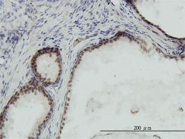 IHC-P - RPA14 antibody (ab58317)