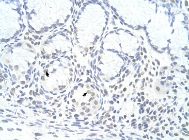 Immunohistochemistry (Formalin/PFA-fixed paraffin-embedded sections) - Anti-ZNF580 antibody (ab59015)
