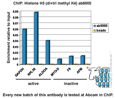 ChIP - Histone H3 (di+tri methyl  K4) antibody [mAbcam 6000] - ChIP Grade (ab6000)