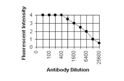 Immunocytochemistry/ Immunofluorescence - Cytomegalovirus Glycoprotein B antibody [2F12] (ab6499)