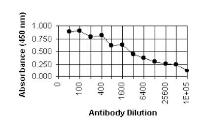 ELISA - Cytomegalovirus antibody [6F12] (ab6500)