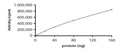 Functional Studies - Lyn protein (Active) (ab60306)