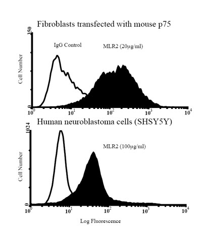 Flow Cytometry - p75 NGF Receptor antibody [MLR2] (ab61425)