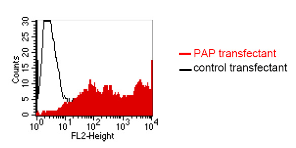 Flow Cytometry - Prostatic Acid Phosphatase antibody [LT3D1] (ab61707)
