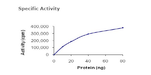 Functional Studies - MEK1 protein (Active) (ab63209)