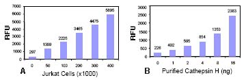 Functional Studies - Cathepsin H Activity Fluorometric Assay Kit (ab65305)