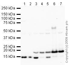 Western blot - FABP4 antibody (ab66682)