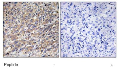 Immunohistochemistry (Formalin/PFA-fixed paraffin-embedded sections) - COX17 antibody (ab69611)