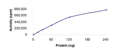 Functional Studies - HIPK4 protein (Active) (ab69925)